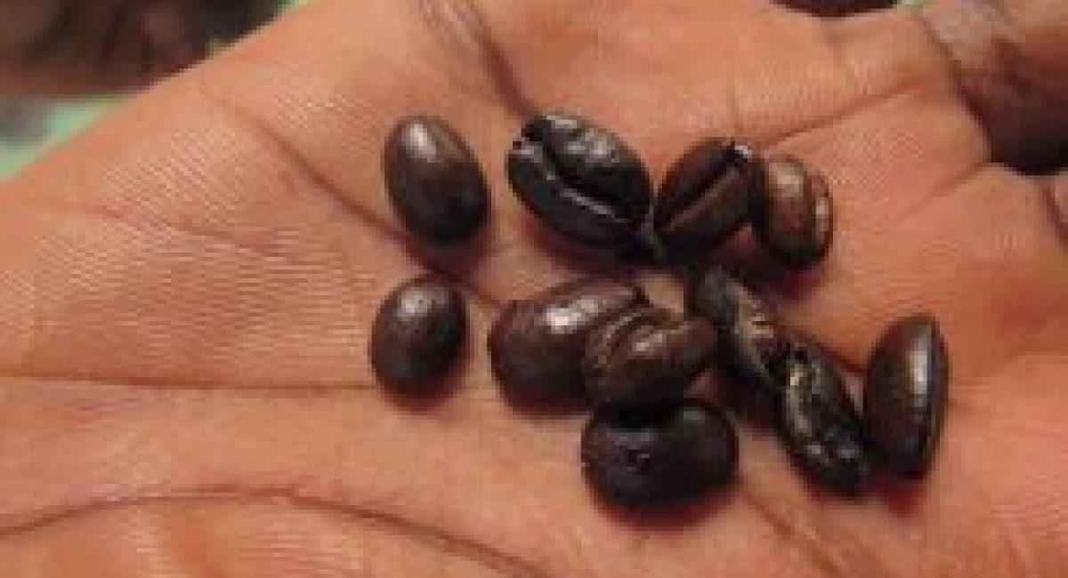 COFFEE FROM INNOVACOOP